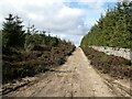 NY9455 : Byway in Slaley Forest by Oliver Dixon