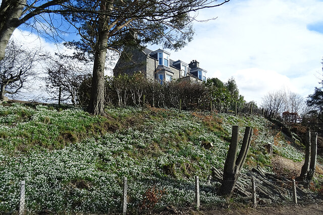 Snowdrops at Auchindachy House