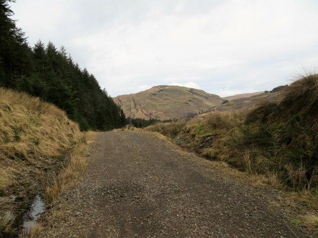 Forest track in Gleann Culanach