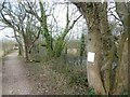 SX9488 : Canalside footpath, Lime Kiln Quay, Exeter Canal by David Smith