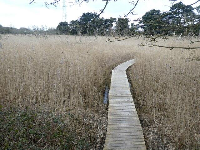 Boardwalk in Old Sludge Beds Nature Reserve