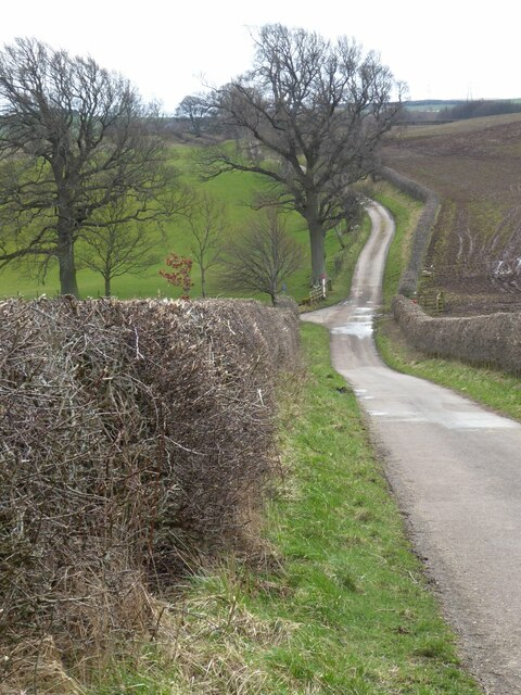 Well clipped hedges