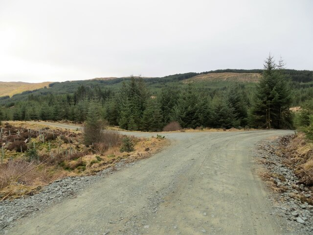 Junction of tracks in the forest above Glen Aray