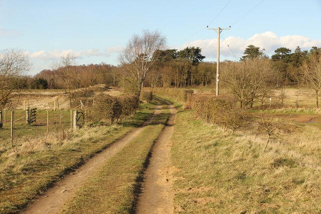 Bridleway to Twigmoor Woods