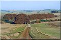 SU1471 : Wessex Ridgeway on Clatford Down by Des Blenkinsopp