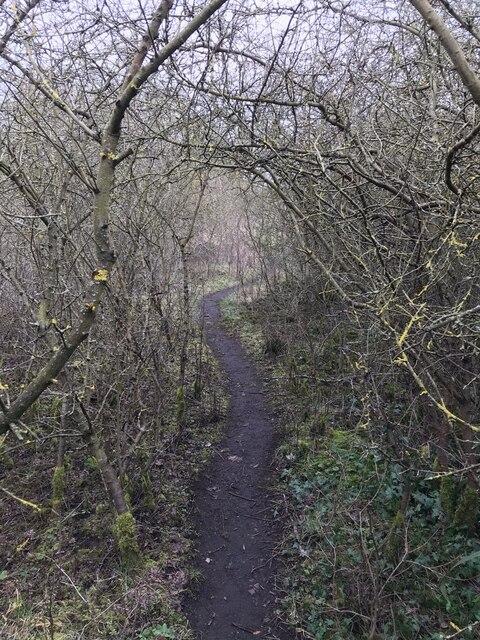 A path through hawthorns