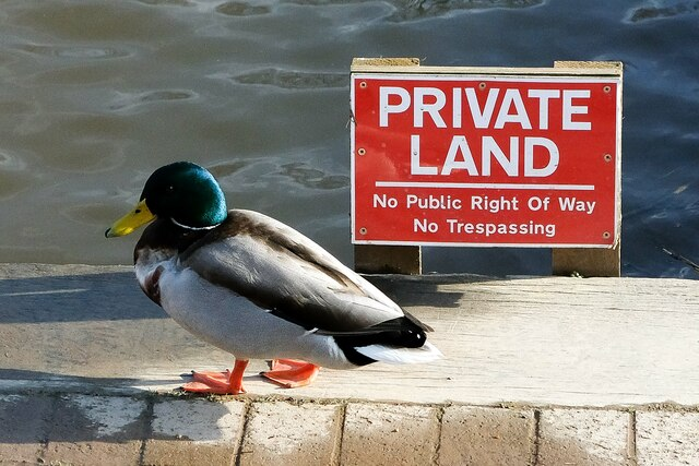 Ducks and other wildlife exempt