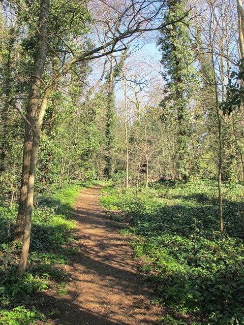 Path through wood by North Circular, near Audley Road