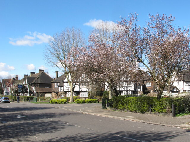 Purple plum blossom, Hanger Hill Garden Estate