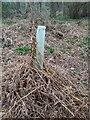 TF0820 : A failed planting by Bob Harvey