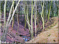 SD7718 : The Clough at Buckden Wood by David Dixon