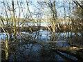 SE3622 : A source of the flood, Newland by Christine Johnstone
