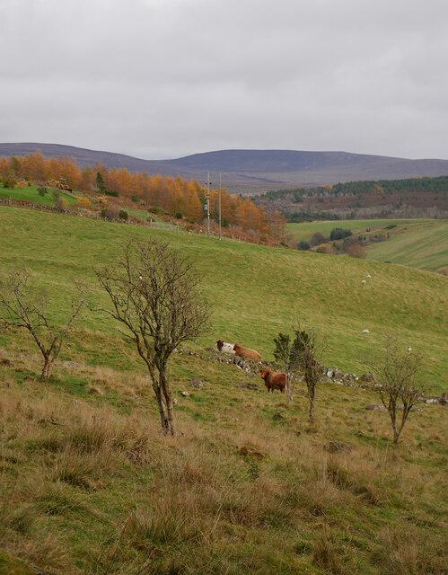 Fields, by Faillie