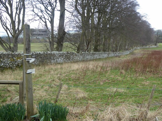 Wall to the east of Callaly Deer Park