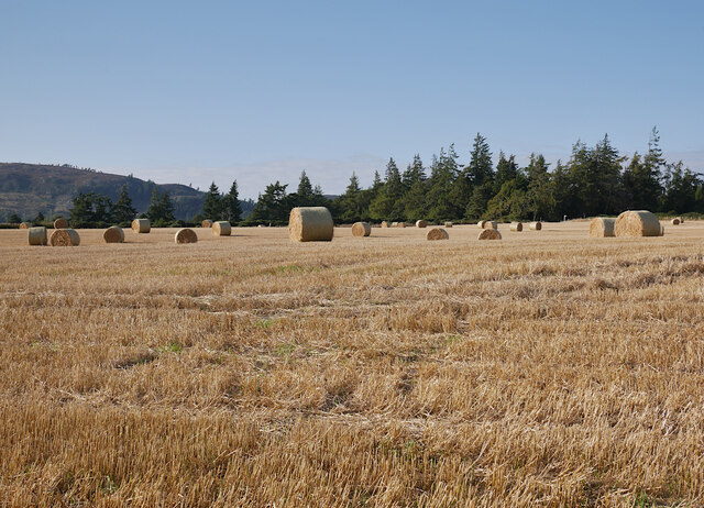 Harvested field, by Darris