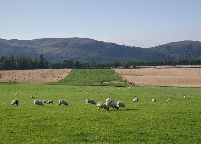 Fields, by Darris
