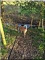TF0820 : Deer crossing by Bob Harvey
