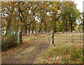 NH5937 : Gateposts, Aldourie by Craig Wallace