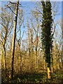 TF0820 : One dead tree by Bob Harvey