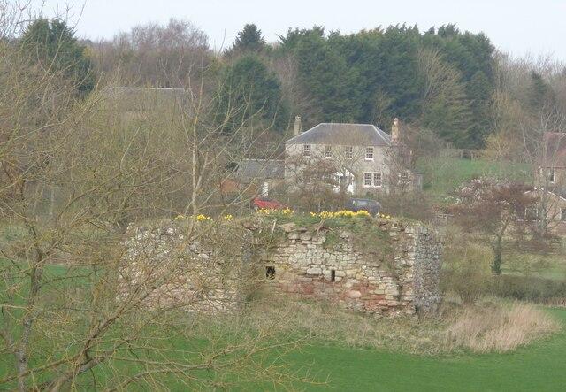 Daffodils on Wallace's Tower Roxburgh
