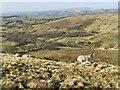 SD7717 : New lambs on Holcombe Moor by Bill Boaden