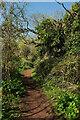 SX8962 : Path near Preston Primary School by Derek Harper