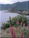 NG8825 : Eilean Donan Castle by Chris Andrews