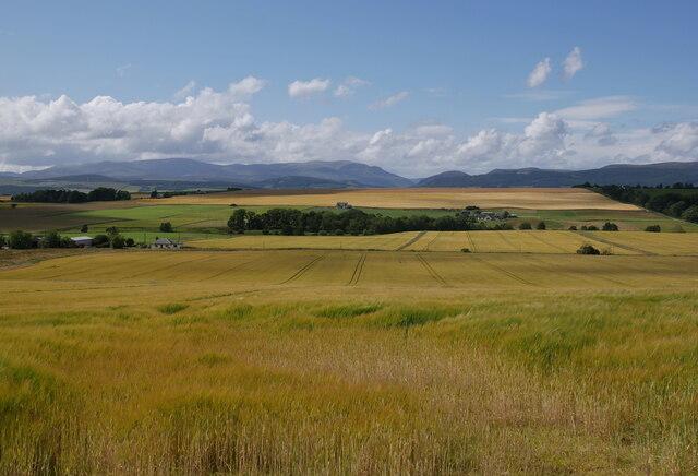 Fields, Easter Culbo