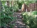 NY2723 : The Cumbria Way, Briar Rigg by Adrian Taylor