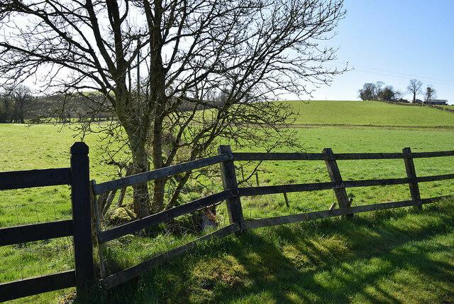 Tree and fence, Rahoran