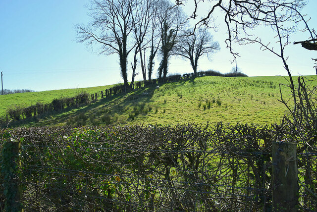 Hedge and trees, Aghingowly