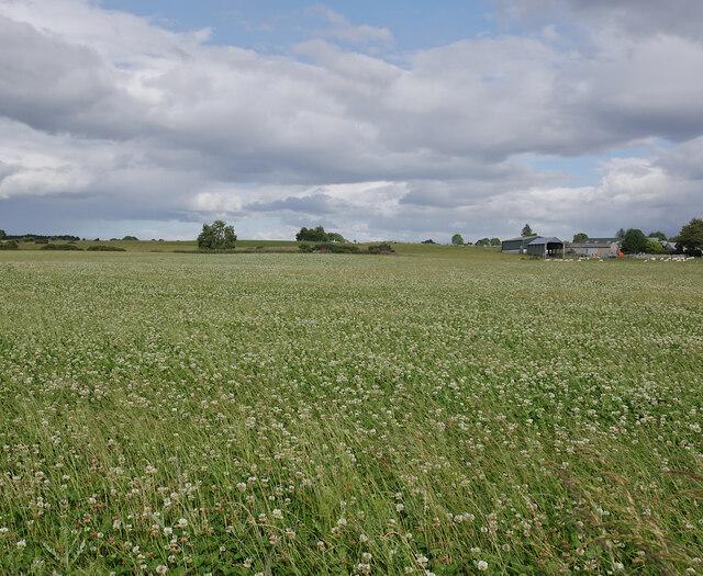 Fields, Muir of Allangrange