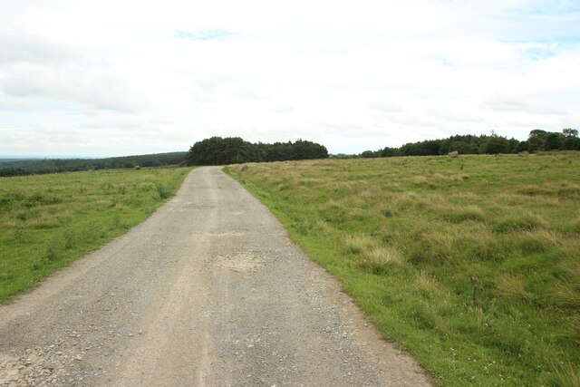 Track east of Springhill Farm