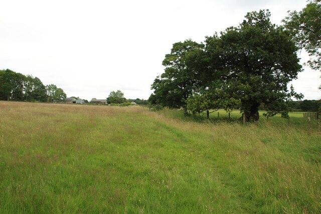 Grass field west of Bluecoat Farm