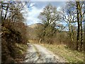 NY2824 : Woodland track, Forge Brow by Adrian Taylor