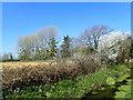 TQ7246 : Ditch near Brandenbury Farm by Marathon