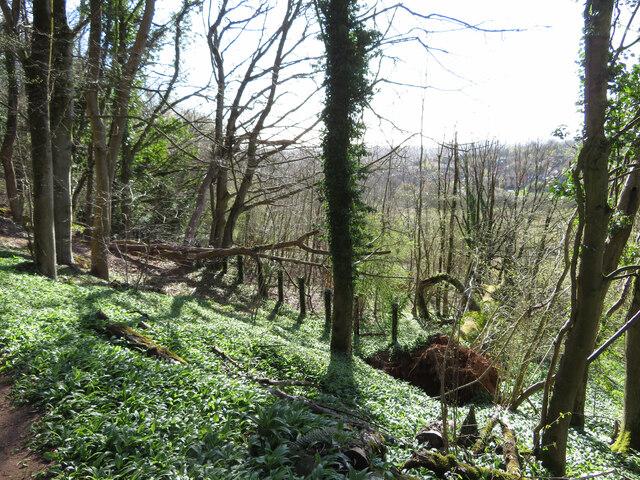 Southern hillside of Lesser Garth Hill