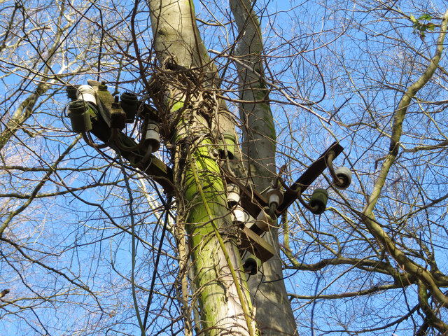 Derelict electricity pole in Garth Wood