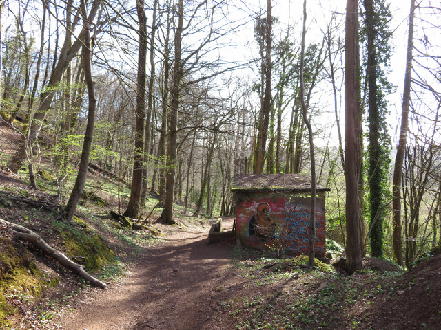 Path through Garth Wood