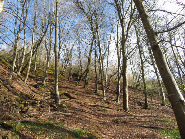 Trees in Garth Wood