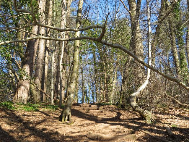 Footpath climbing through Garth Wood