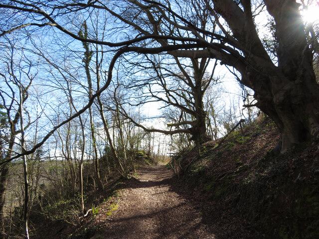 Track through Garth Wood