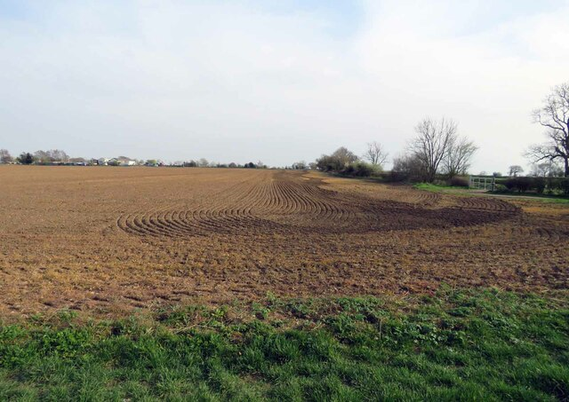 Field east of Gilmorton Road by Andrew Tatlow