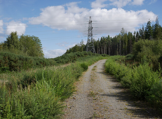 Track, Auchmore Wood
