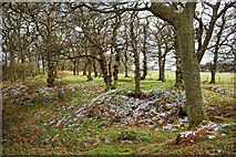 NH5857 : Upper section, Drummondreach Wood by Julian Paren