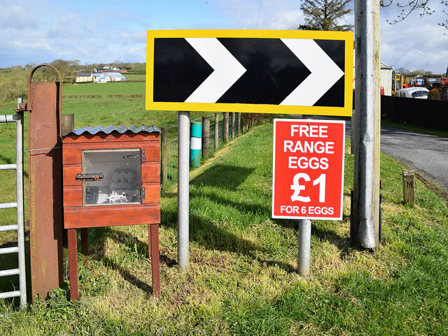 Free range eggs for sale, Cooley