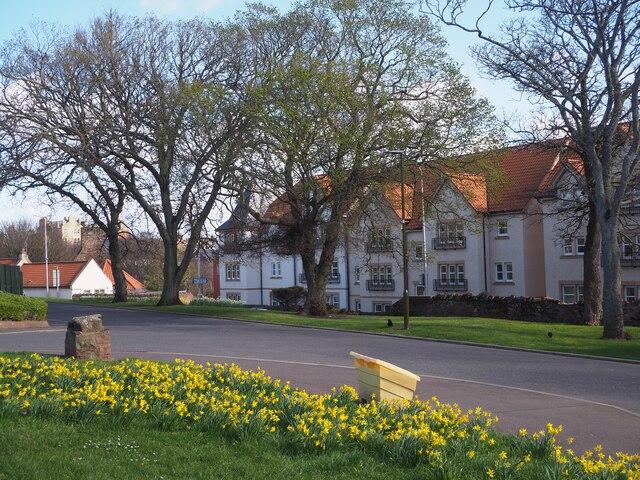 Daffodils at Parsons Pool Dunbar