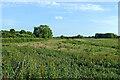 SJ9321 : Rough pasture by Radford Meadows near Stafford by Roger  Kidd