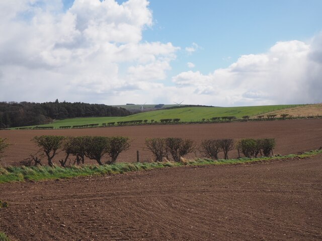 A newly planted field at Birnieknowes