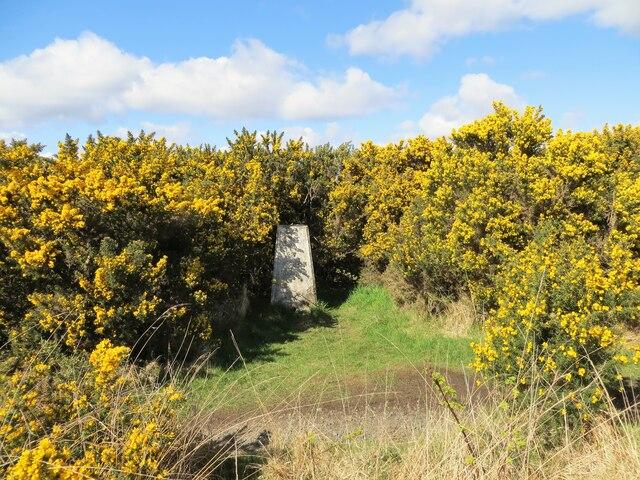 Triangulation pillar on Ardmore Peninsula 5m